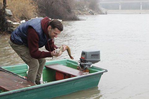Manić je riba iz porodice bakalara koja je migracijom došla iz Severnog ledenog mora i nastanila naše vode.