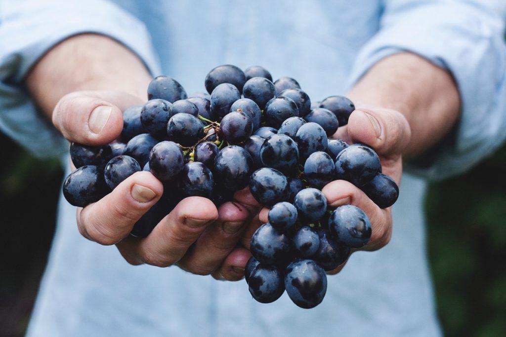 Prvo organski sertifikovano vino iz Beograda / ilustracija: unsplash